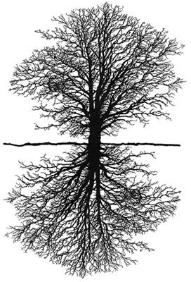 Silhouette of tree above & below ground
